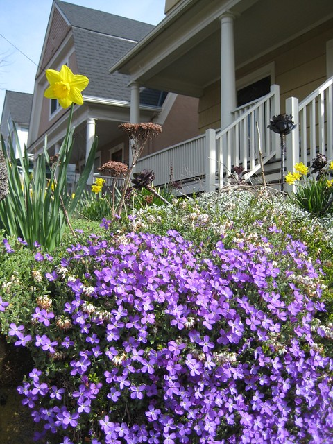 Front yard flowers flickr photo sharing - Flowers for the front yard ...