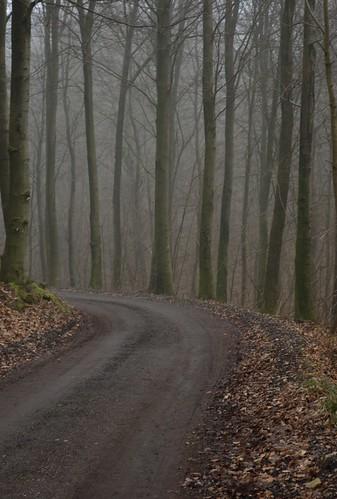 road mist forest denmark bend bok danmark beech vejle väg dimma bokskog vägkrök