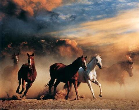 wild horses running free explore horselover16s photos