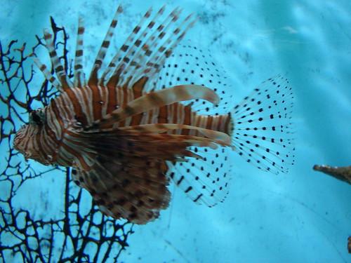 Imagenes de animales exoticos taringa for Imagenes de jardines exoticos