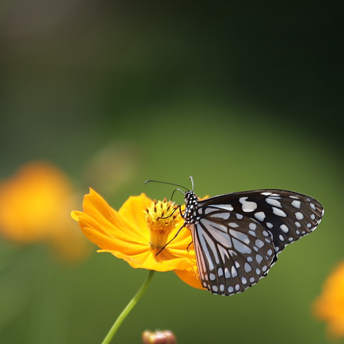 flower green nature yellow butterfly kerala explore frontpage