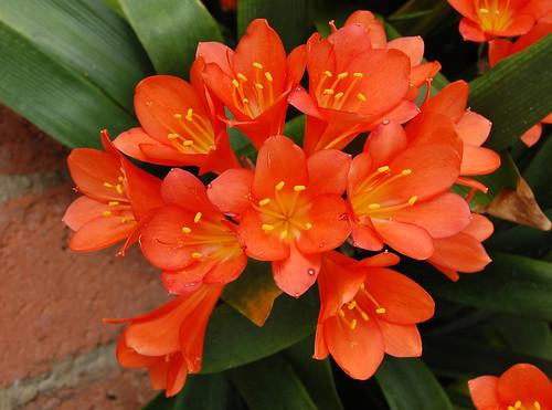 Aglaonema low light gardening - Plantas resistentes al frio ...