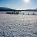 Frozen Fields by Brian Auer