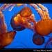 Jellyfish (5)