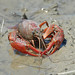 Crayfishes - Photo (c) birdgal5, some rights reserved (CC BY-NC-ND)