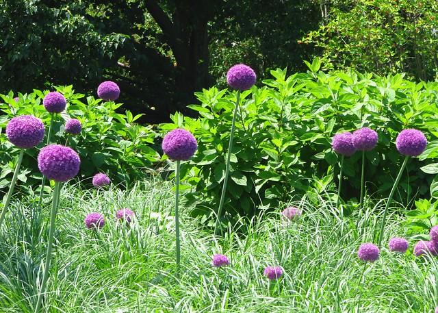 Chicago Botanic Gardens 44