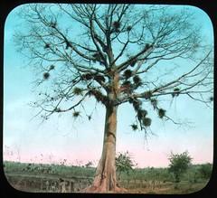 Arbor Day Tree Quotes