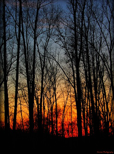 sunset nature carson photography woods tn tennessee east morristown easttennessee easttn morristowntn hamblencounty carsonphotography
