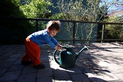 little kid moving a big watering can down to the flo…