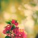 Thursday by Sarai | Fotography