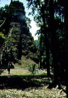 Tikal - 1957