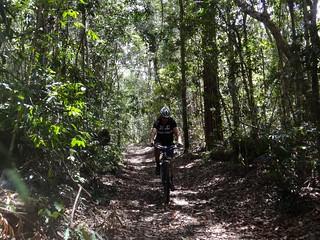 Kin Kin Creek Trail