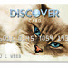 Cat Design Credit Card: Talouse