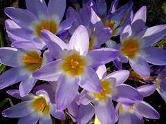 Garden Flowers by Nina