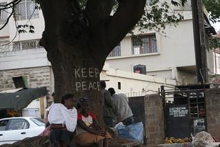 Peace Tree, Nairobi