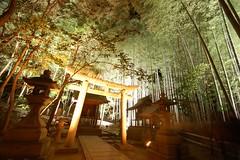 deep forest shrine