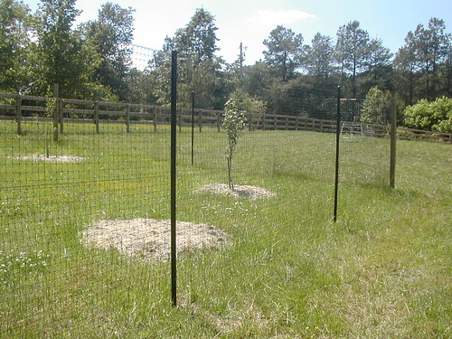 Deer fence protects young fruit trees from browse