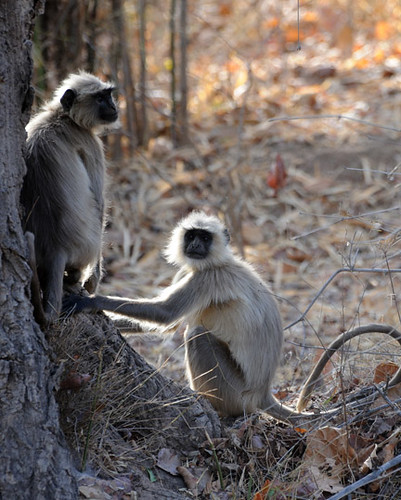 Morning Gossip at Bandhavgarh