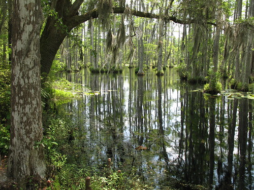reflection water southcarolina charleston swamp northamerica cypress 2009 lowcountry berkeleycounty