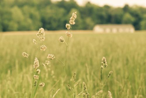 flowers usa field grain indiana hay hayfield fieldhouse greencastle putnamcounty