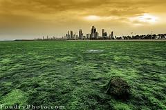 Kuwait SeaWeed Garden