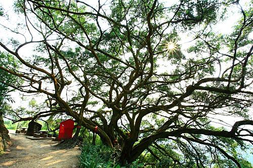 68i6莺歌步道-千年大榕树 | flickr – 相片分享!