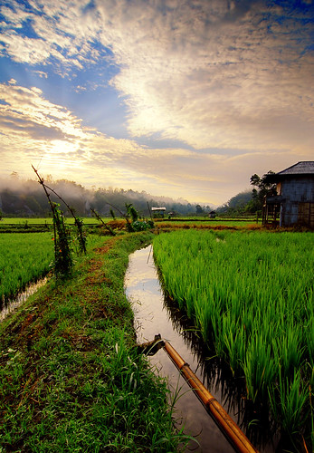morning field sunrise sumatra indonesia landscape nikon warm rice paddy wideangle tokina lampung sumatera d80 nikonflickraward batubrak