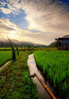 Batu Brak rice field 2