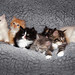 Cute kittens by crsan
