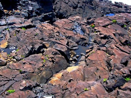 Seaside Bedrock