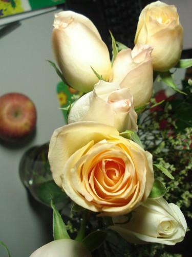 香槟色玫瑰花_香槟色的玫瑰代表什么?-香槟玫瑰花语是什么?