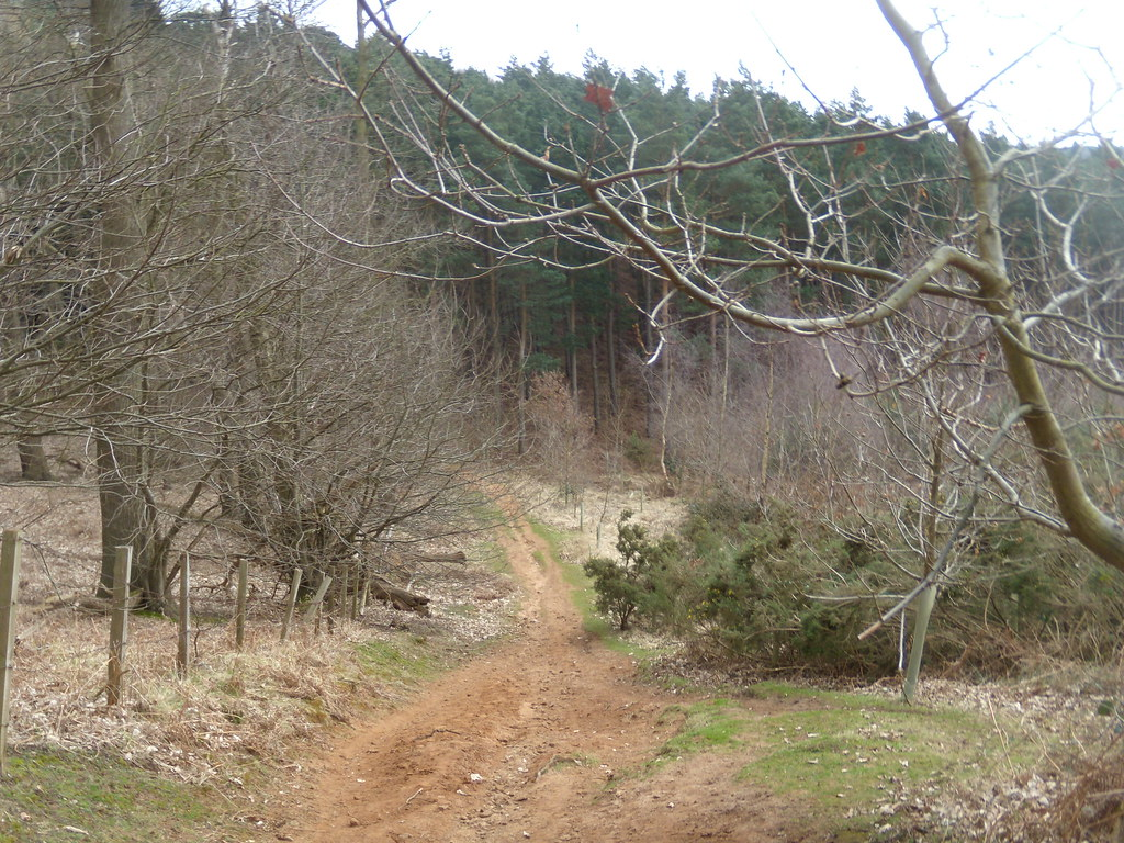 Steeply down Back Wood. Bow Brickhill to Woburn Sands