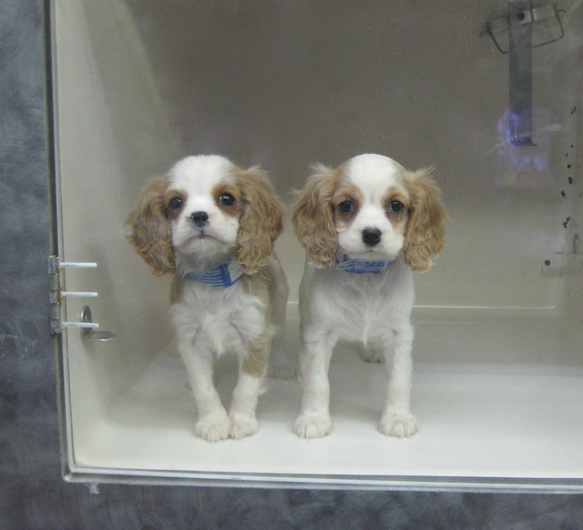 Pet Store Dogs For Sale