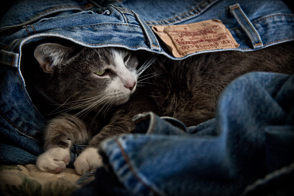 The Comfort of Denim
