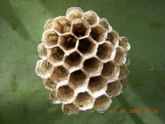 honeycomb, macro photography,