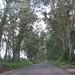 Kauai far, Apr. 09