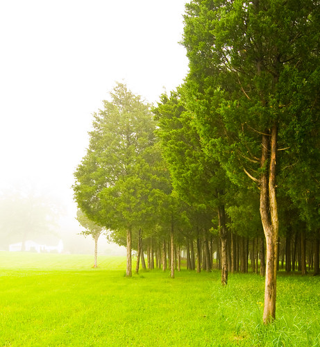 trees mist tree green nature fog forest virginia spring farm foggy vivid wideangle tokina1224 evergreen civilwar manassas battlefield foggymorning d300 manassasbattlefield civilwarmemorial manassasbattlefieldpark