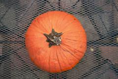 Pumpkin Party 2009