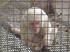 動物展示不是尊重生命的作法,更不適合當成環境教育的教材。(圖片來源:關懷生命協會)