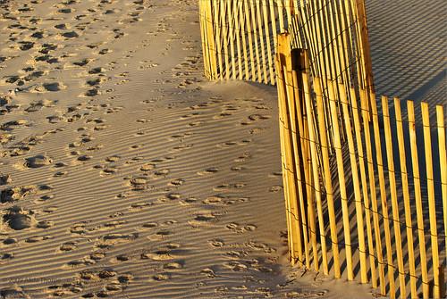 sunlight beach sunrise fence longislandny fireisland animaltracks deertracks nationalseashore davispark fireislandny stormfence foxtracks svfsposs