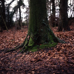 The world 39 s best photos of square and trees flickr hive mind for Square root of 1089