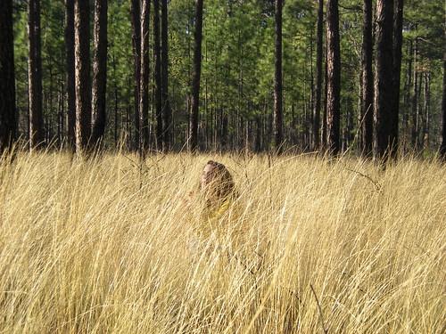 trees grass pine woods hide camouflage pinetrees naturepreserve weymouthwoods