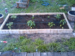 3440435884 b633221f03 m Things You Can Do To Improve Your Organic Gardening