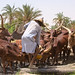 At The Well  / Yusufari / Red Fulani Cattle