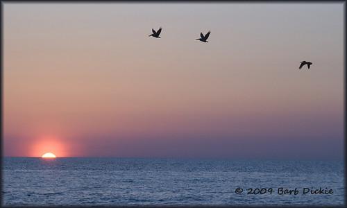 pelicans floridapanhandle nikond80 floridastateparks sunsetgulfofmexico gripskw barbdpics stjosephstateparkflorida campflorida travelusgulfofmexico
