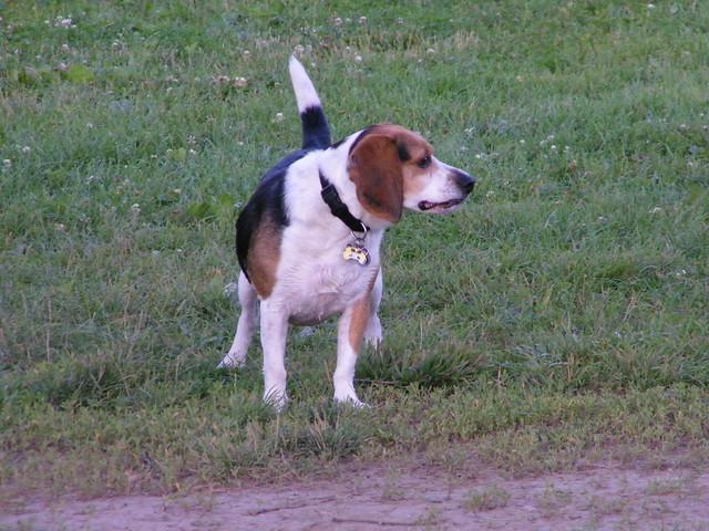Flapjack at the saline dog park mill pond park for 7194 garden pond