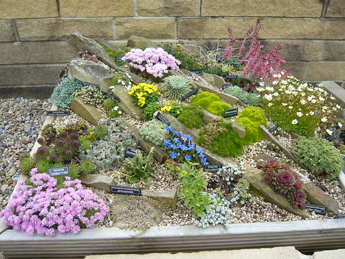 Rockery plants in a rock box gardeners tips for Rockery designs for small gardens