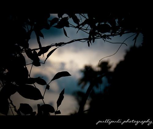 trees sunset sky india tree green tourism nature beauty grass silhouette canon river photography evening leaf photos bank roadtrip kerala sandhya cochin kochi ernakulam periyar jishnu aluva periyaar kerana 1000d jishnuvediyoor vediyoor thiruviranikkulam jishuvediyoor jishnuvediyoorphotography sooryastamanam