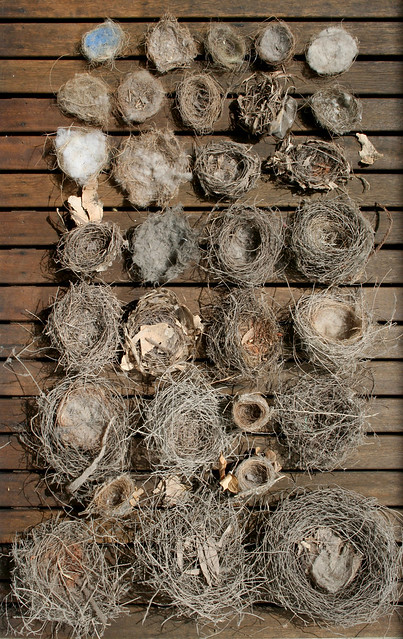 Bird S Nest Collection Flickr Photo Sharing