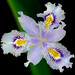Iris Family - Photo (c) James Gaither, some rights reserved (CC BY-NC-ND)